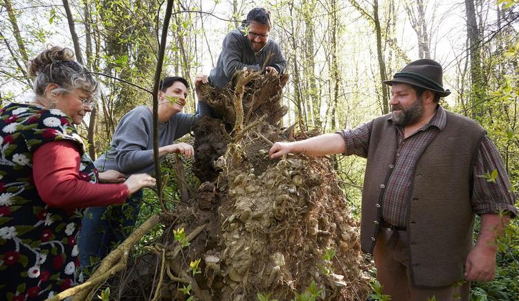 Waldkammergut (© Daniela Stockinger)
