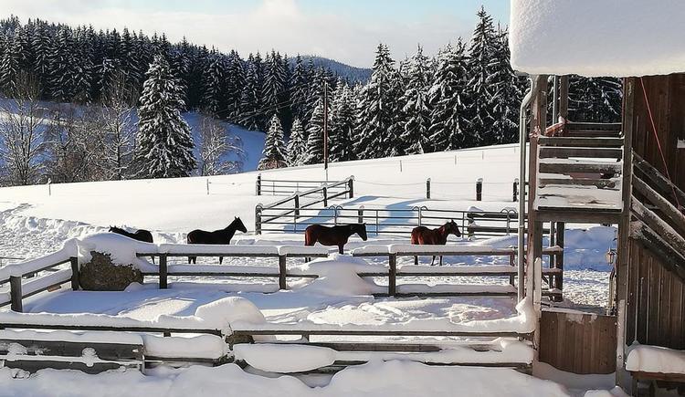 Hof im Winter (© Familie Schmalzer)
