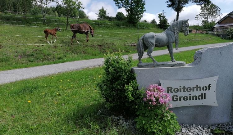 Reiterhof Greindl (© Greindl)