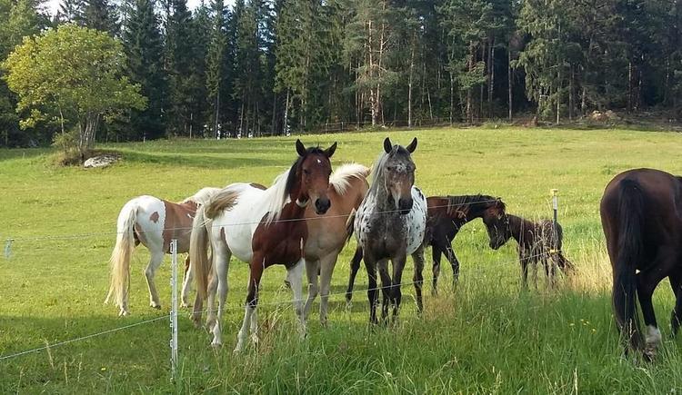 Pferde (© Familie Schmalzer)