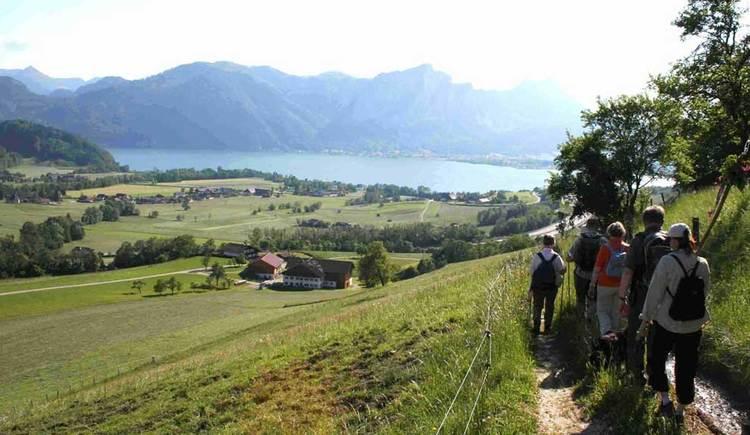 einige Personen gehen eine Weg entlang, auf der Seite ist eine Wiese, im Hintergrund ist der See und die Berge. (© www.mondsee.at)