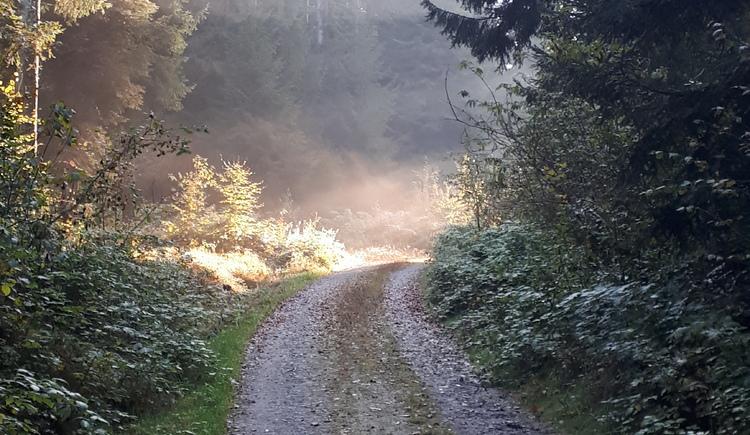 Herbstwandern in Pfarrkirchen (© Lang Johann)