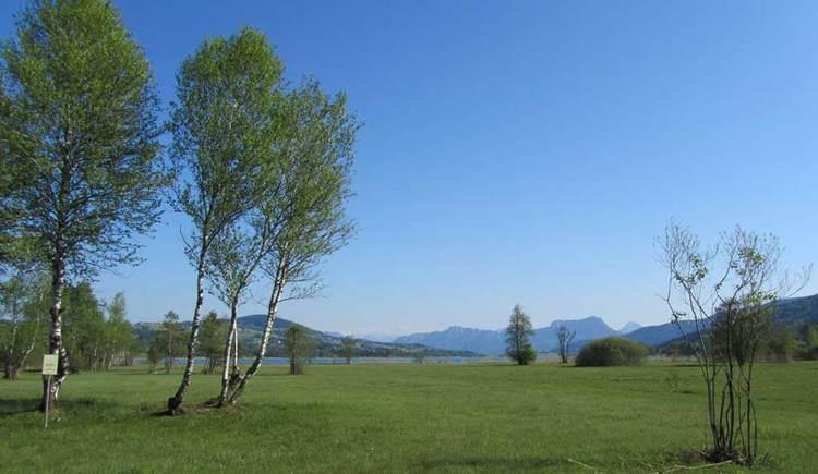 das Nordmoor, im Hintergrund der Irrsee und einige Berggipfel. (© www.mondsee.at)