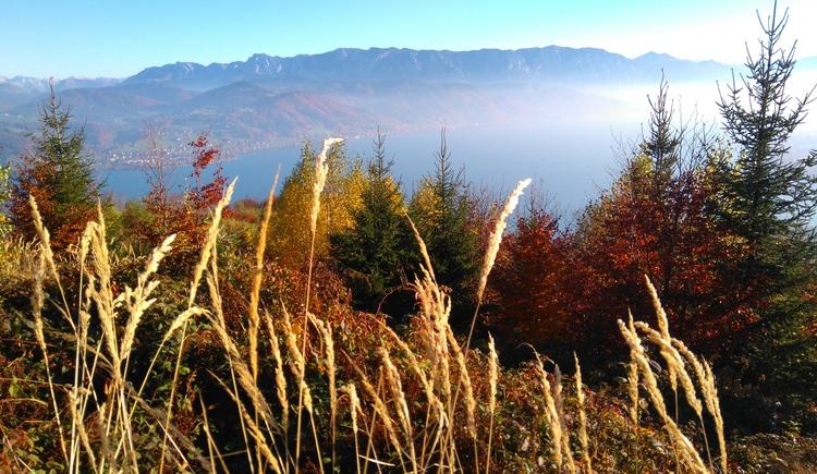 goldener Herbst im Attergau. (© Pension Holzapfel)