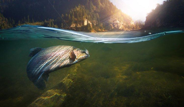Fisch am Haken unter Wasser