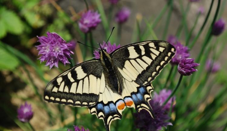 Schmetterlingsweg