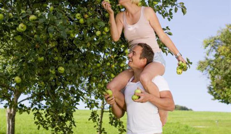 lustige Apfelernte (© Privat)