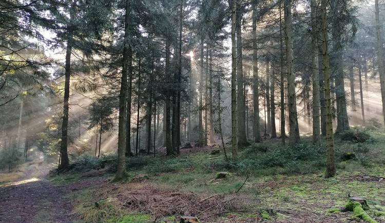 Pfarrwaldweg (© lang Johann)