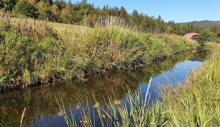 Schwemmkanal in Sonnenwald Richtung Blauer Hirsch (© Ferienregion Böhmerwald | Maria Felhofer)
