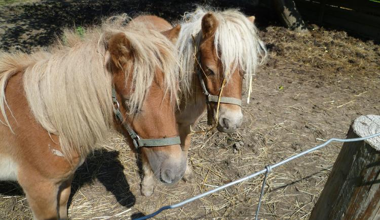 Unsere Ponys Struppi und Strizi