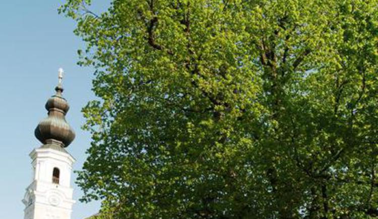 Dorflinde von Faistenau (© Tourismusverband Faistenau)