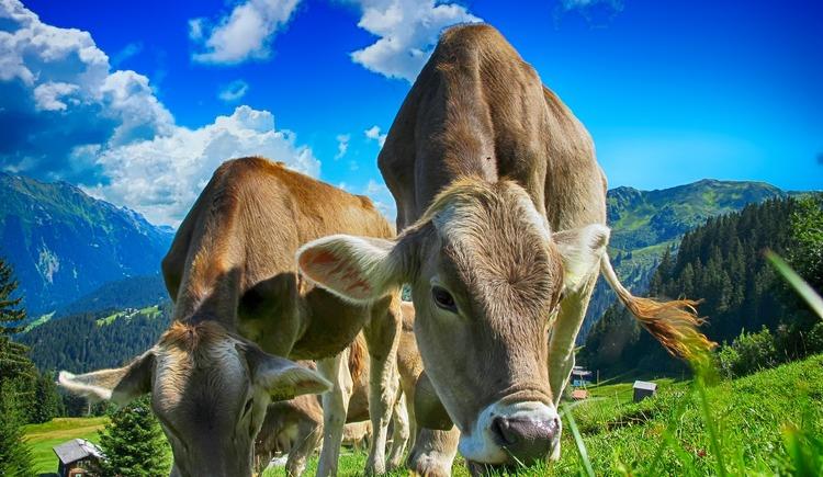 Bauernhof Fam. Zopf. (© Pixabay)