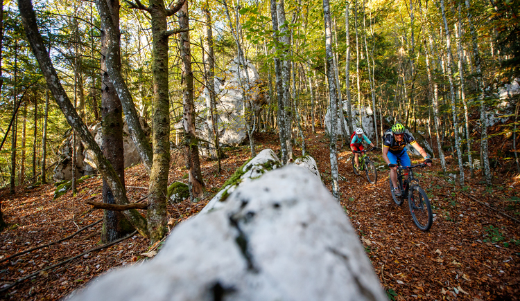 Sometimes you go through the forest in the Salzkammergut. (© © bikeboard.at Erwin Haiden)