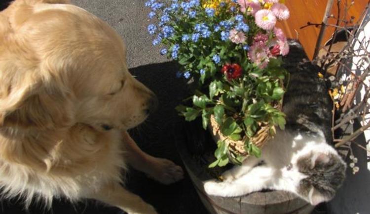 Aaron, unser Hund will mit Mucki spielen (© Bürtlmair)