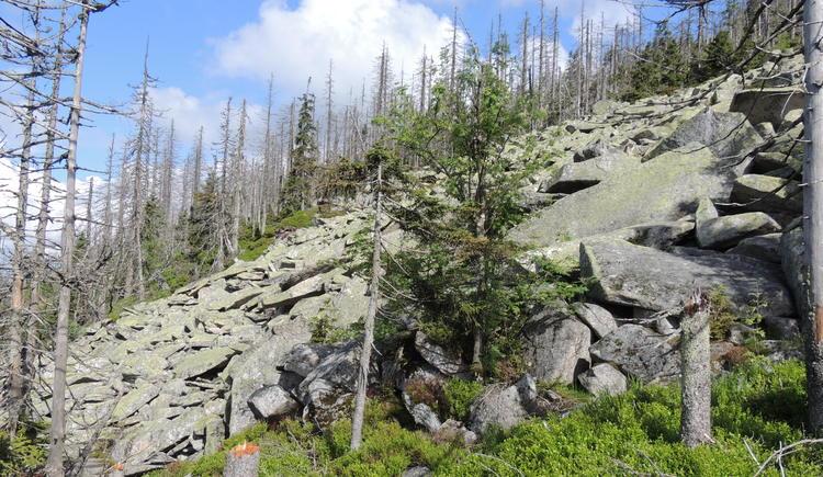 Der Weg führt zum Dreisesselberg
