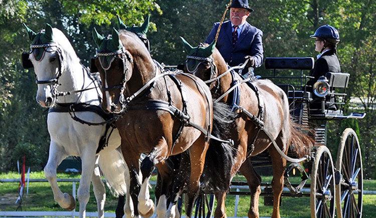 Pferdezentrum Stadl-Paura. (© Pferdezentrum Stadl-Paura)