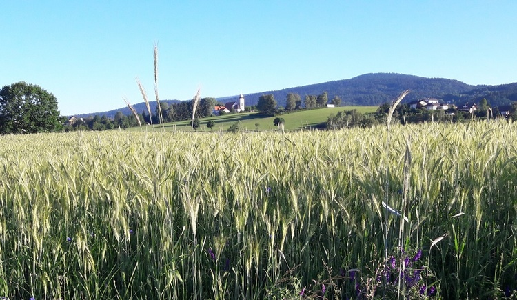 Klaffer im Juni (© Ferienregion Böhmerwald | Felhofer)