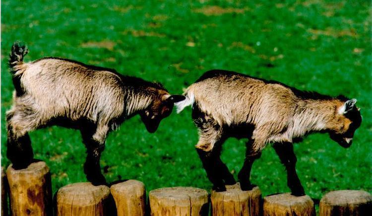 Wels: Tierpark Wels