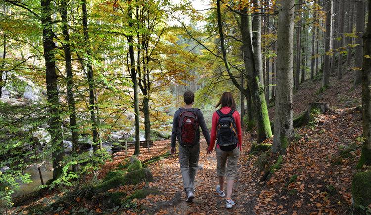 Die Ruhe des Waldes genießen (© OÖ Tourismus/Röbl)