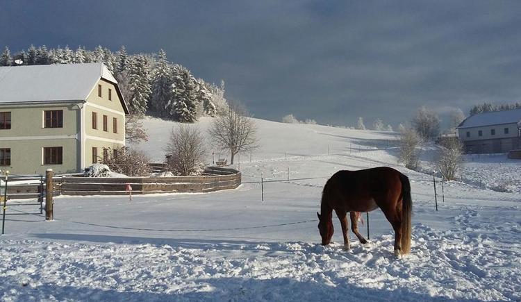 Winter mit Pferd (© Familie Schmalzer)