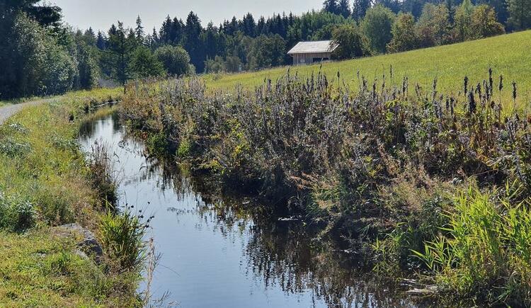 Schwemmkanal in Sonnenwald (© Ferienregion Böhmerwald | Maria Felhofer)