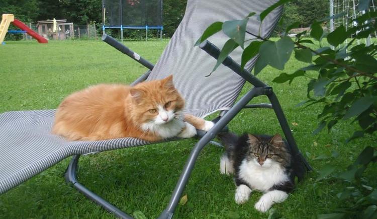 entspannen Sie wie Lucky und Snoopy (© kloiber)