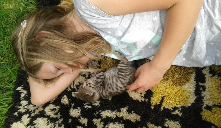 Süßer Katzennachwuchs