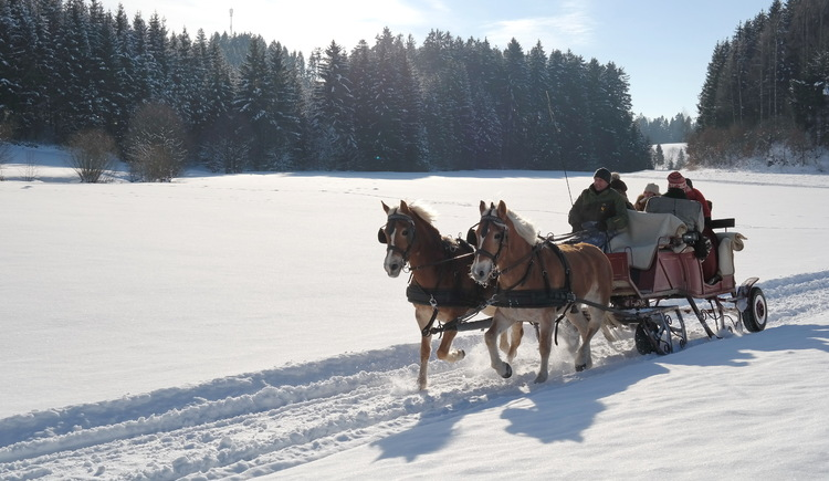 Pferdeschlittenfahrt (© Georgs Kutscher Hof)