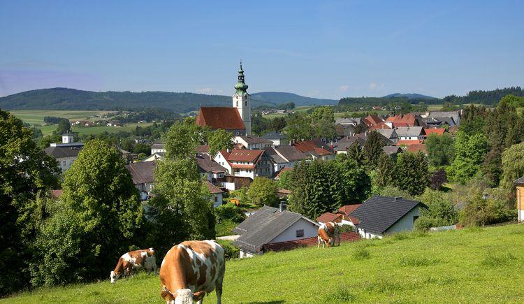 Ortsbild Frankenmarkt mit Kühen
