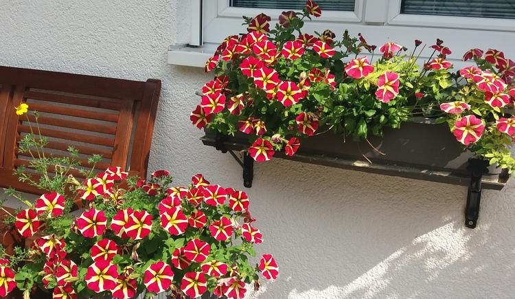 Sommer, Sonne, saubere Luft und viele Blumen