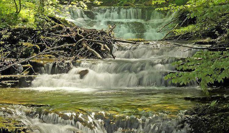 am Wald- Wasser- Zauberweg in Hintersee