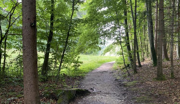 Märchenwanderweg Unterach am Attersee Waldweg. (© TVB Attersee-Attergau)
