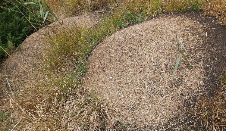 Ameisen (© CA)
