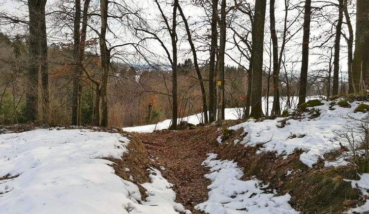 Aufstieg nach Hadersdorf (© Tanja Mittermair)