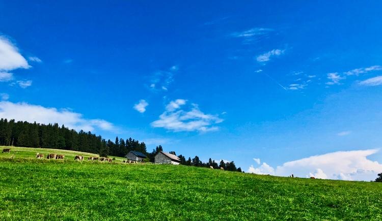 Glückliche Kühe (© Salzkammergut / Harald Maier)