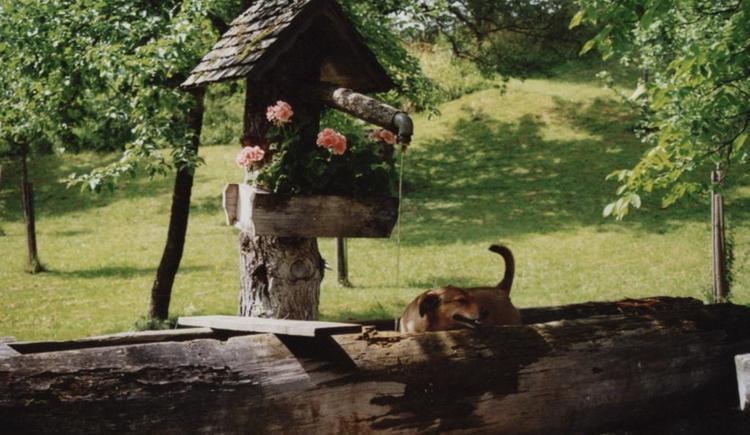 Brunnen vorm Bio-Blockhaus Koglerhütte (© Bio-Blockhaus Koglerhütte)