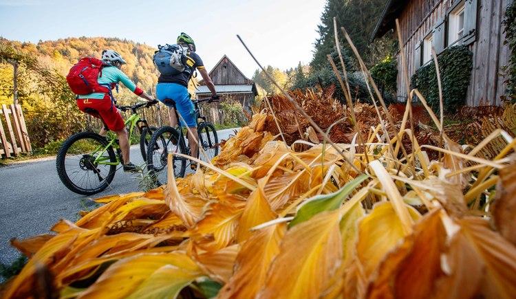Zwischen malerischen Häusern gehts die Panoramastraße  in Bad Goisern bis zur Rathluckenhütte mit dem Mountainbike hinauf. (© Erwin Haiden Bikeboard.at)