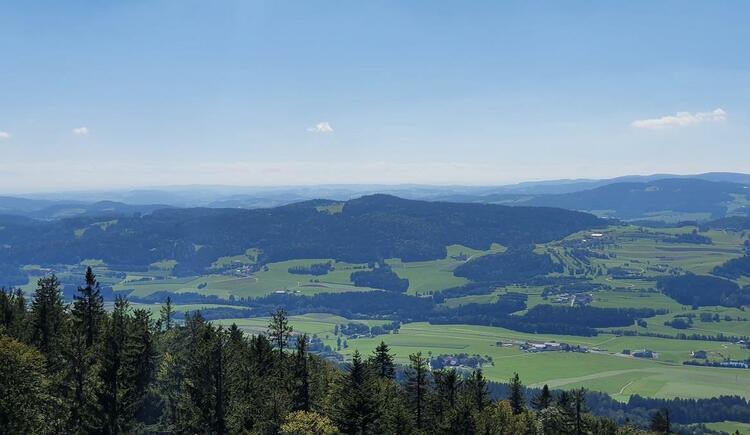 Ausblick bis in die Alpen (© Maria Felhofer | Ferienregion Böhmerwald)