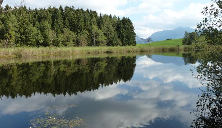 Foto vom Egelsee mit schöner Spiegelung des Waldes im Wasser. (© Werner Schnetzer)