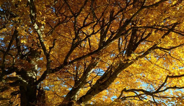Herbstfärbung (© werner mair)