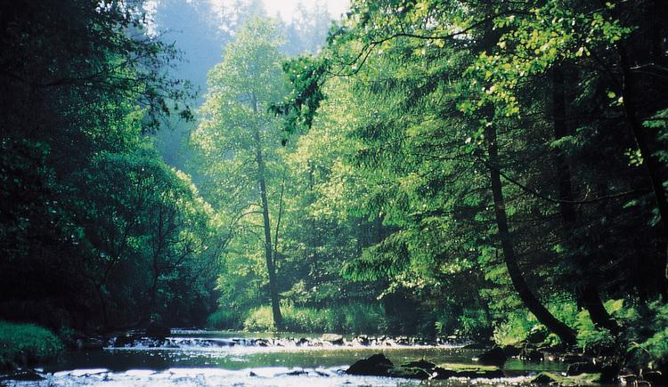 Flusslauf mit Bäumen zu beiden Seiten. (© Ferienregion Böhmerwald)