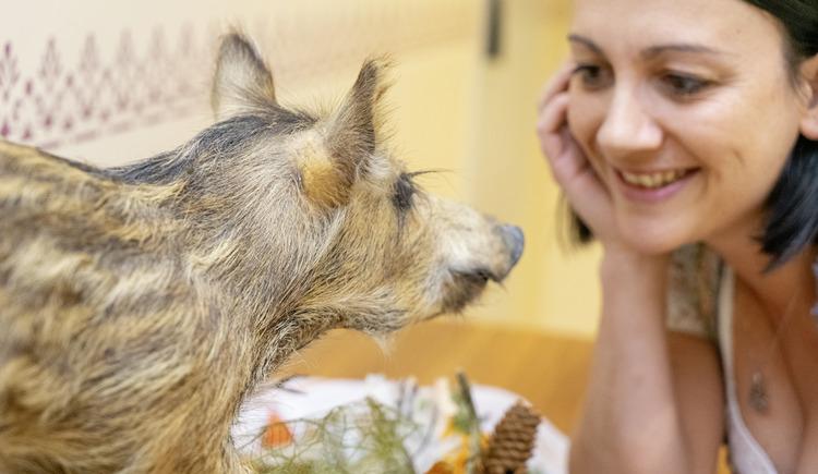 Wildschwein kleiner (© Bruno Brandstetter)
