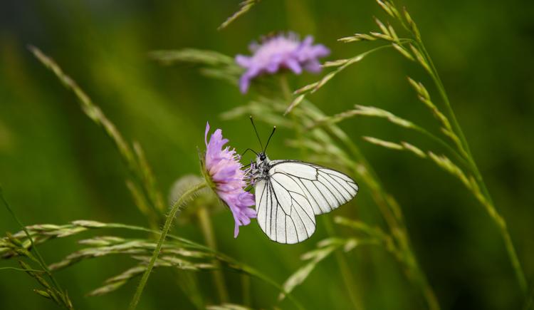 Naturschätze Ausseerland (© TVB Ausseerland - Salzkammergut/Jacqueline Korber)