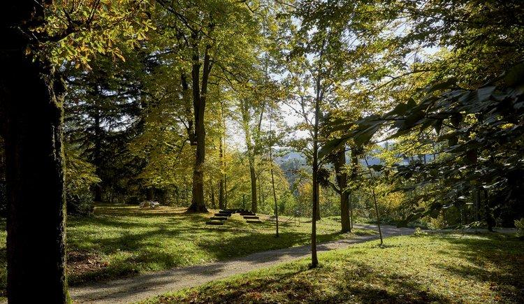 Kurpark Bad Hall im Herbst. Die Bäume sind grün mit einem leichten gelblichen Farbstich. Die Sonne scheint im Hintergrund durch die Blätter durch. (© EurothermenResort Bad Hall_Holnsteiner)
