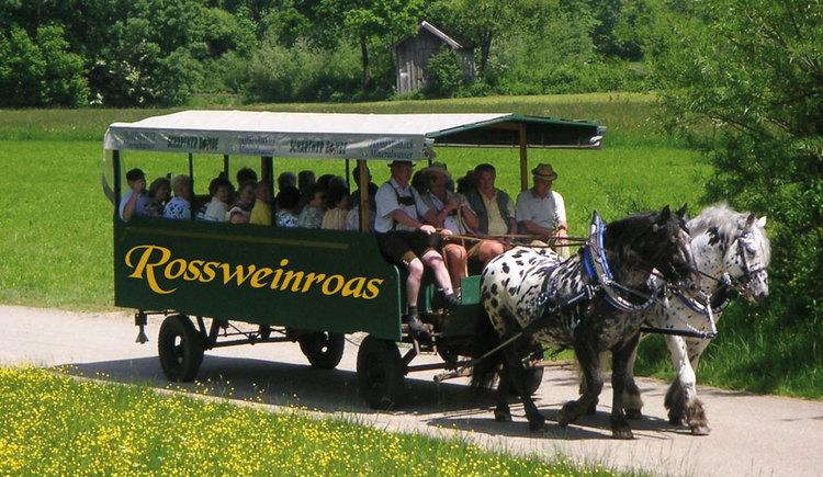 Rossweinroas, Pferdekutsche, Weinverkostung, Jause. (© TVB Attergau)