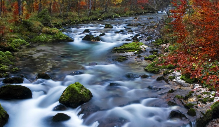 The Waldbach (stream) Echerntal in Hallstatt in autumn.