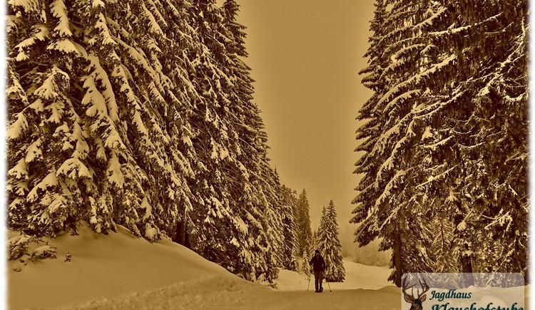 Schneeschuhwandern in unserem Winter-Märchen-Wald. (© Jagdhaus Klaushofstube)