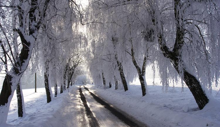 Zu sehen ist eine verschneite Straße, geäumt von verschneiten Bäumen. (© Innviertel-Tourismus_Andreas Mühlleitner)