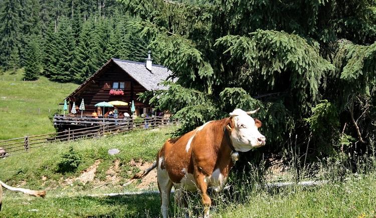 Die für ihre köstlichen, selbstgemachten Mehlspeißen bekannte Hütte bietet einen wunderbaren Blick auf den Dachstein und den Gosaukamm und ist in einer ca. eineinhalbstündigen Wanderung erreicht.\n\n\n