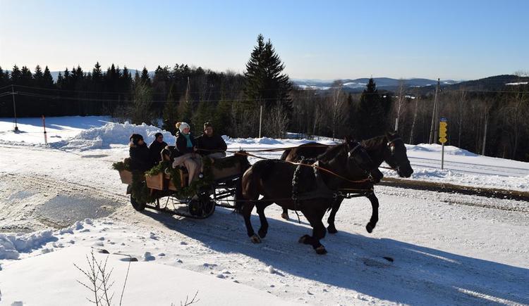 Pferdeschlittenfahrten (© Privat)